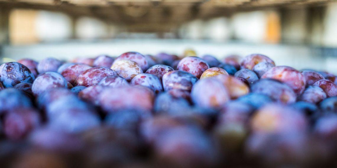 Originia Foods - Agrinarsa